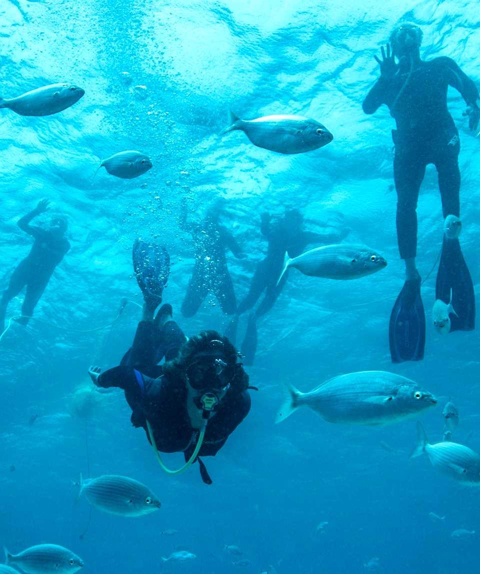 Snorkeling & Diving Corralejo Fuerteventura