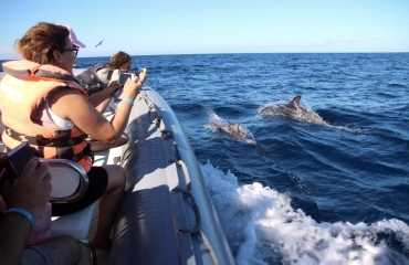 Dolphin Search Morro Jable
