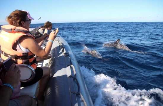 Whale and Dolphin Search Morro Jable Fuerteventura