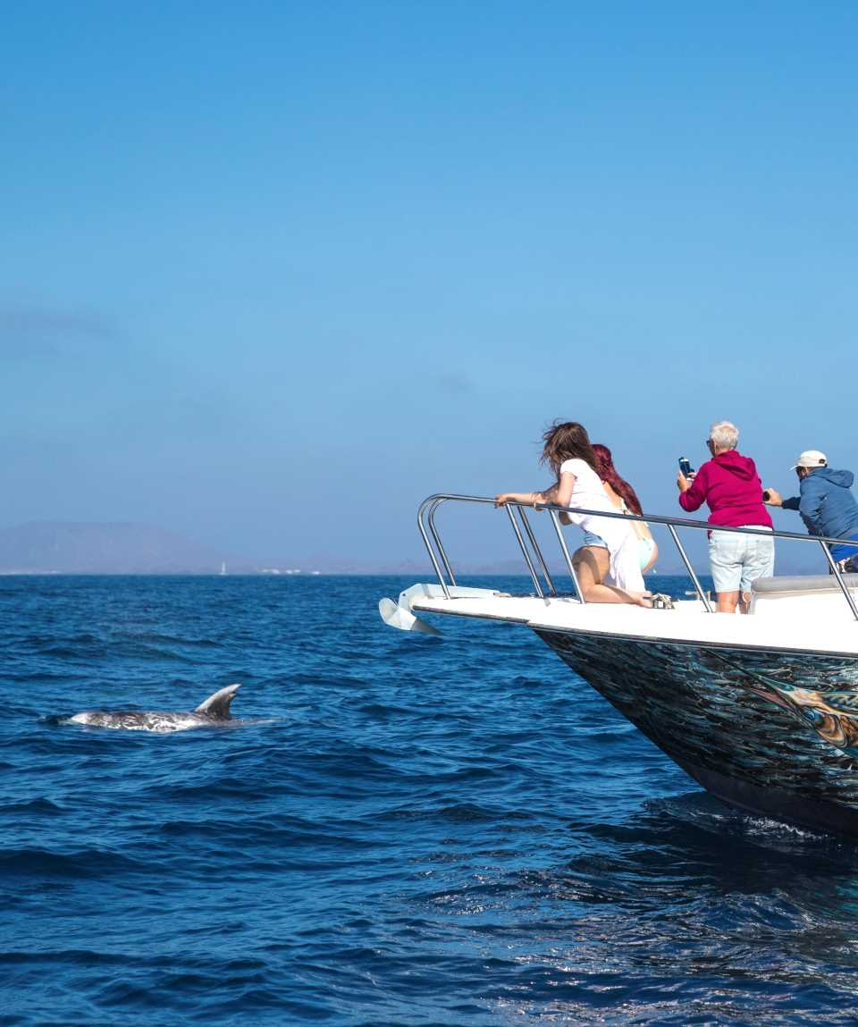 Whale & Dolphin Watching Corralejo Fuerteventura