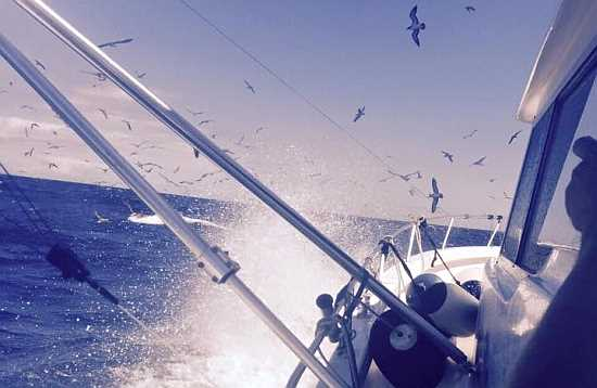 Fishing Trip Morro Jable Fuerteventura