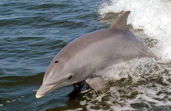 Relax & Dolphins in Jandía Fuerteventura