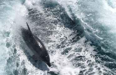 Dolphin Catamaran Select