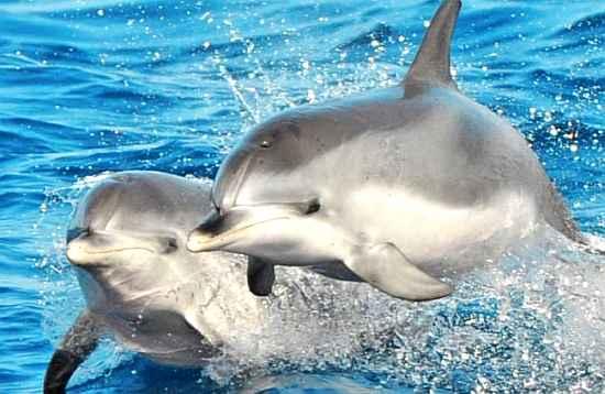 Dolphin Catamaran Select Fuerteventura